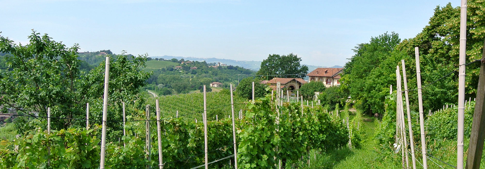 Vineyard estate in the centre of Alba
